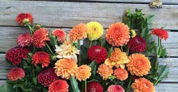 Kesme çiçeğinizin ömrünü nasıl uzatırsınız