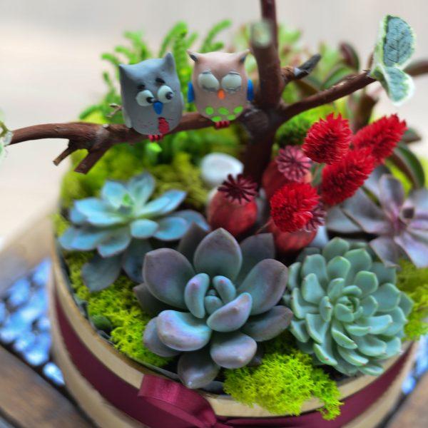 Love Owls - Sukulent ve Terrariumlar - Lunlun Çiçek