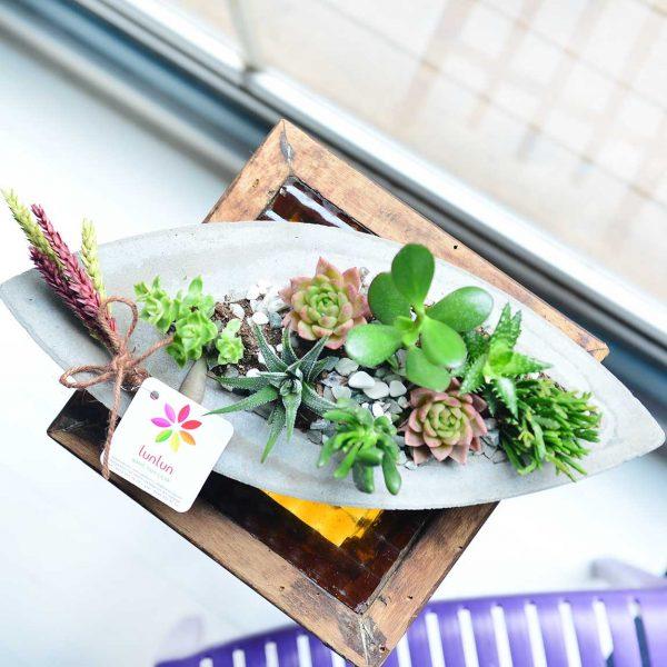 Sailing Away - Sukulent ve Terrariumlar - Lunlun Çiçek