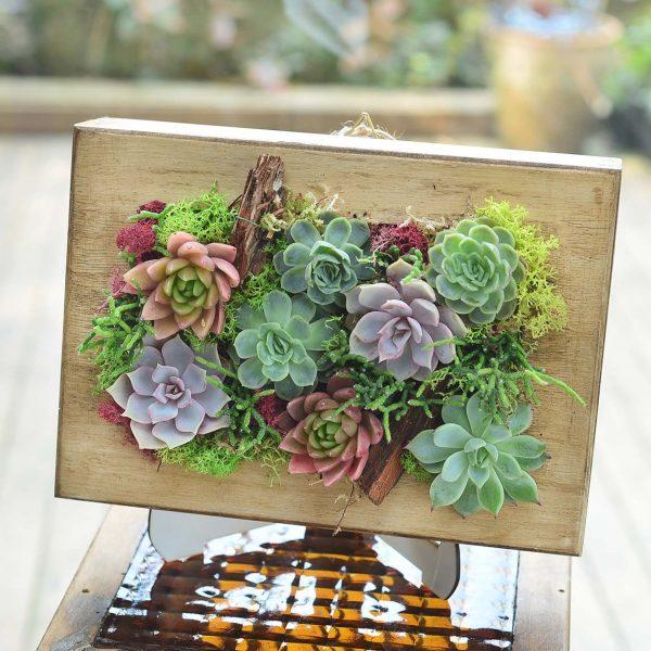 Succulent Frame - Sukulent ve Terrariumlar - Lunlun Çiçek