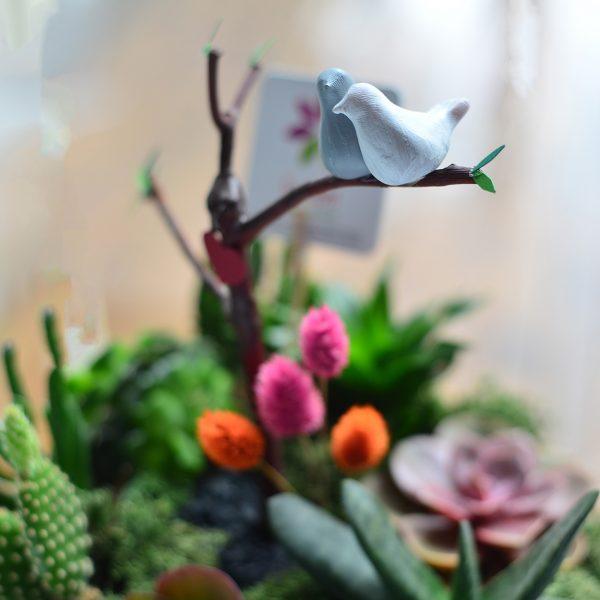 Love Birds maxi - Sukulent ve Terrariumlar - Lunlun Çiçek