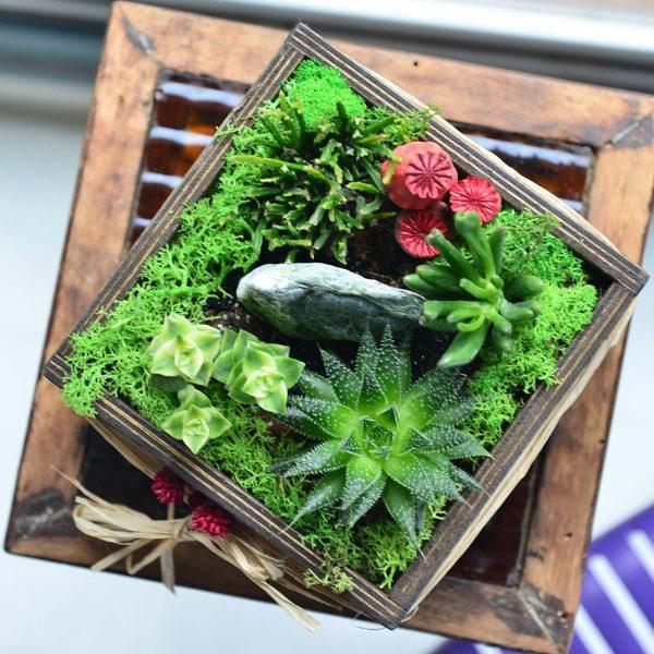 House Warming - Sukulent ve Terrariumlar - Lunlun Çiçek