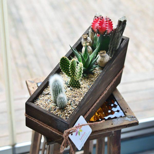 So Real - Sukulent ve Terrariumlar - Lunlun Çiçek