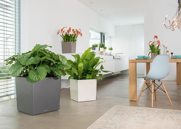 Ofisinize bitki alırken nelere dikkat etmelisiniz?
