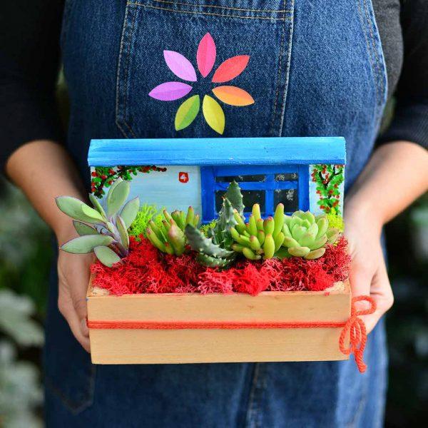 Bodrum Bodrum - Sukulent ve Terrariumlar - Lunlun Çiçek
