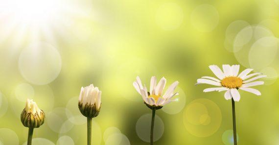 Evimize şans, bereket, iyi enerji, iç huzuru getiren bitkiler
